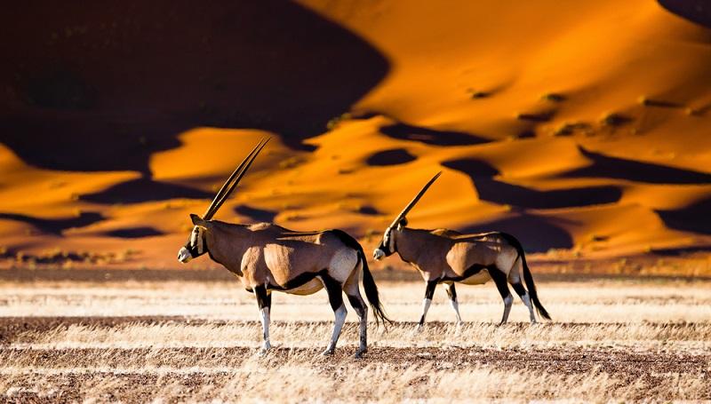 In Namibia trifft man wie in vielen anderen Ländern Afrikas auf extreme Gegensätze.