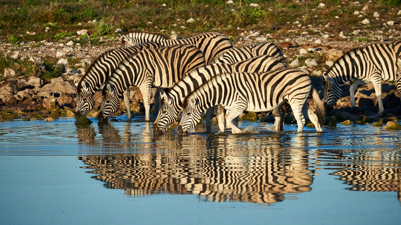 Sind sich Jäger ihrer Verantwortung für Tiere und Umwelt bewusst, werden sie eine nachhaltige Jagd betreiben und für ihren Urlaub eine Jagdfarm auswählen, die diese Art der Jagd anbietet.