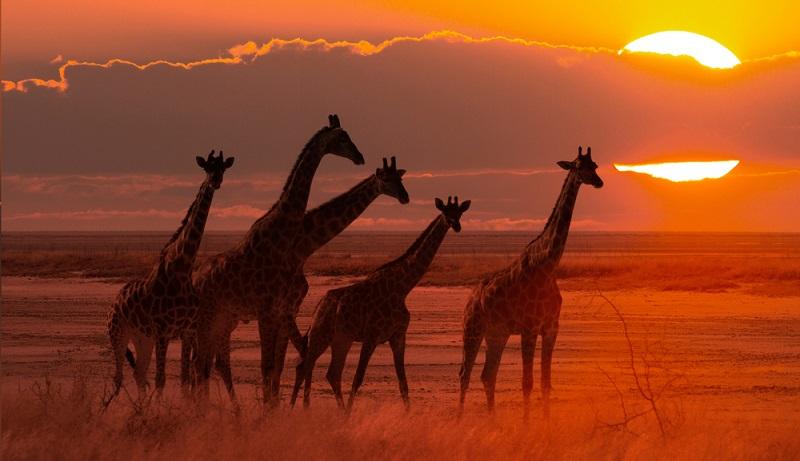 Die Safari in Afrika ist ein nachhaltiges Erlebnis – wer sollte diese Bilder wieder aus dem Kopf bekommen?  ( Foto: Shutterstock- Michael Wick)
