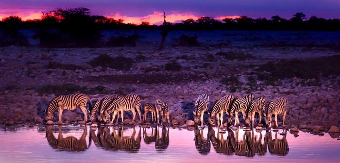 Safari in Afrika: Checkliste und Tipps für Ihre Planung (Foto: shutterstock mbrand85)