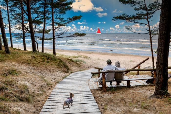 Die Strände an der Ostsee sind wie geschaffen für unsere Hunde. (Foto: shutterstock - Sergei25)
